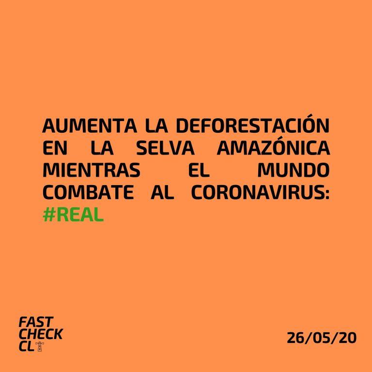 Read more about the article Aumenta la deforestación en la Selva Amazónica mientras el mundo combate al coronavirus: #Real