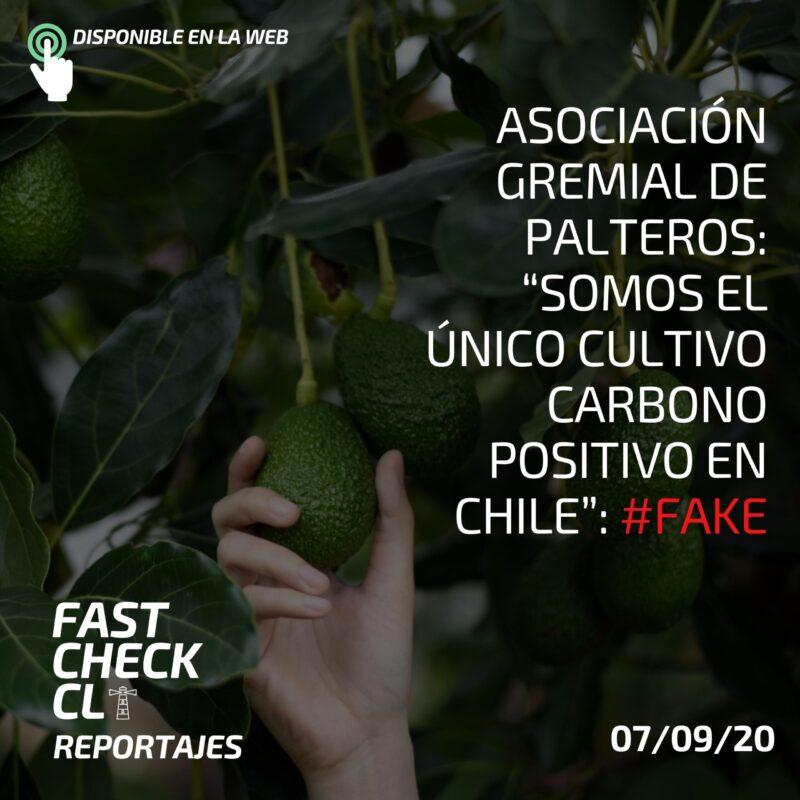 """Asociación Gremial de Palteros: """"Somos el único cultivo carbono positivo en Chile"""": #Fake"""
