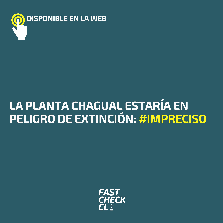 Read more about the article La planta chagual estaría en peligro de extinción: #Impreciso
