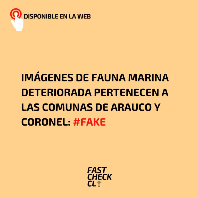 Imágenes de fauna marina deteriorada pertenecen a las comunas de Arauco y Coronel: #Fake