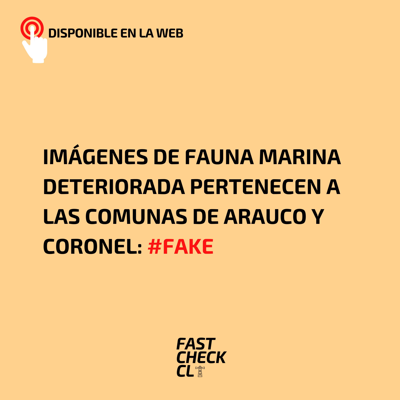 You are currently viewing Imágenes de fauna marina deteriorada pertenecen a las comunas de Arauco y Coronel: #Fake