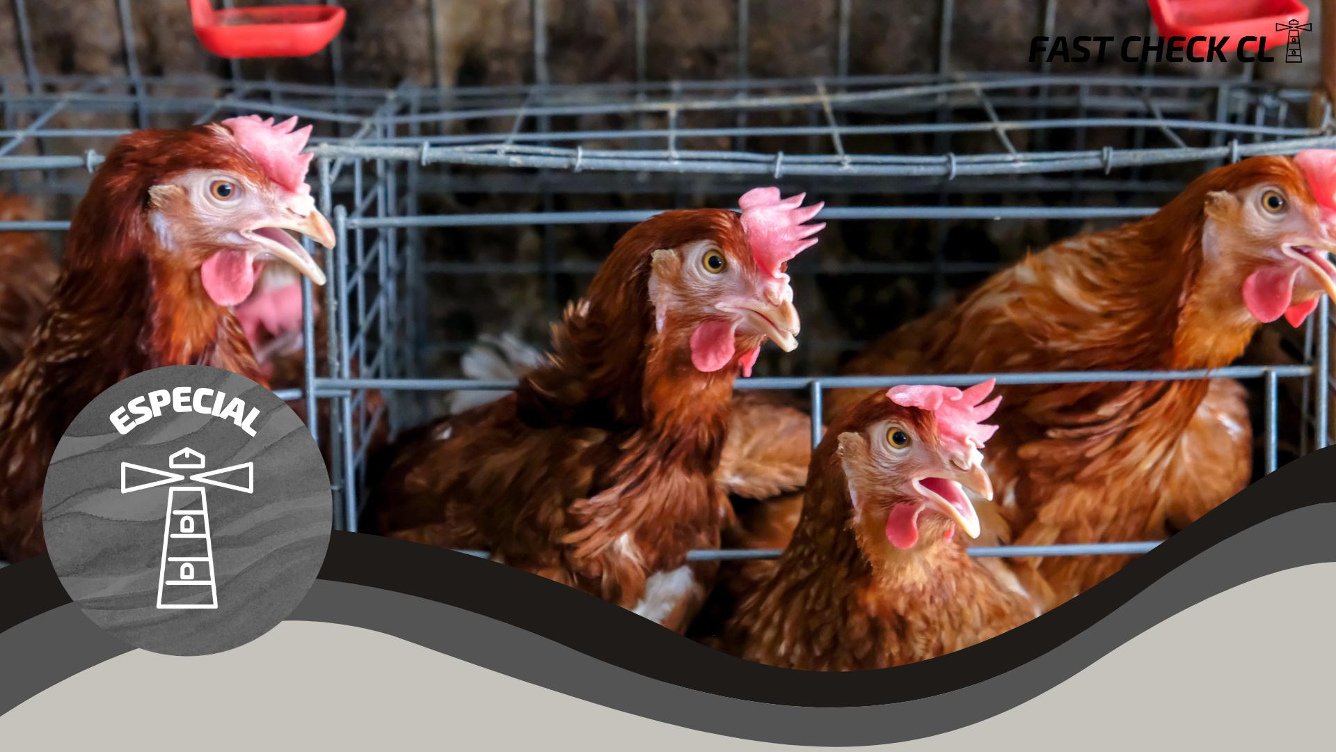 Rusia: Casos de gripe aviar A (H5N8) en humanos