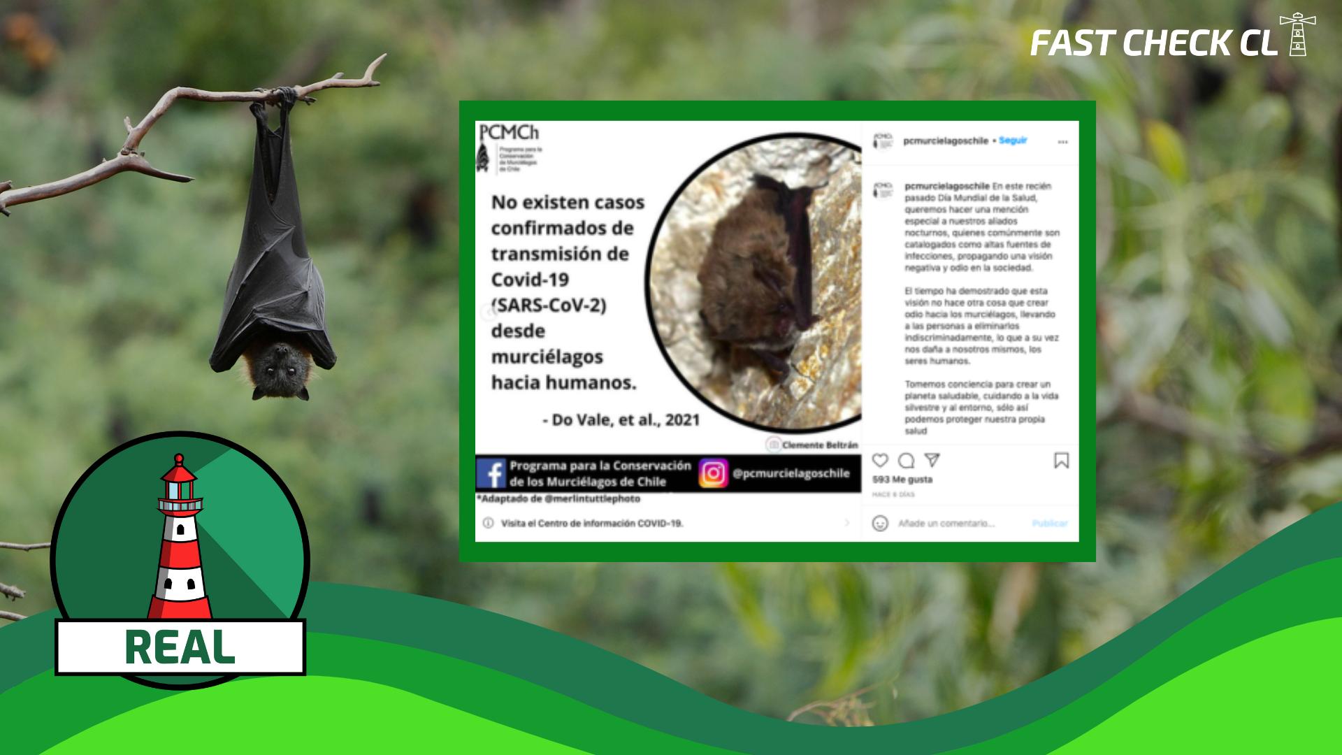 Los murciélagos tienen una historia de coexistencia segura con seres humanos, no existiendo casos confirmados de transmisión de Covid-19 desde la especie hacia humanos: #Real