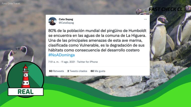 """Read more about the article """"El 80% de la población mundial del pingüino de Humboldt se encuentra en las aguas de la comuna de La Higuera"""" (zona en que se construirá Dominga): #Real"""
