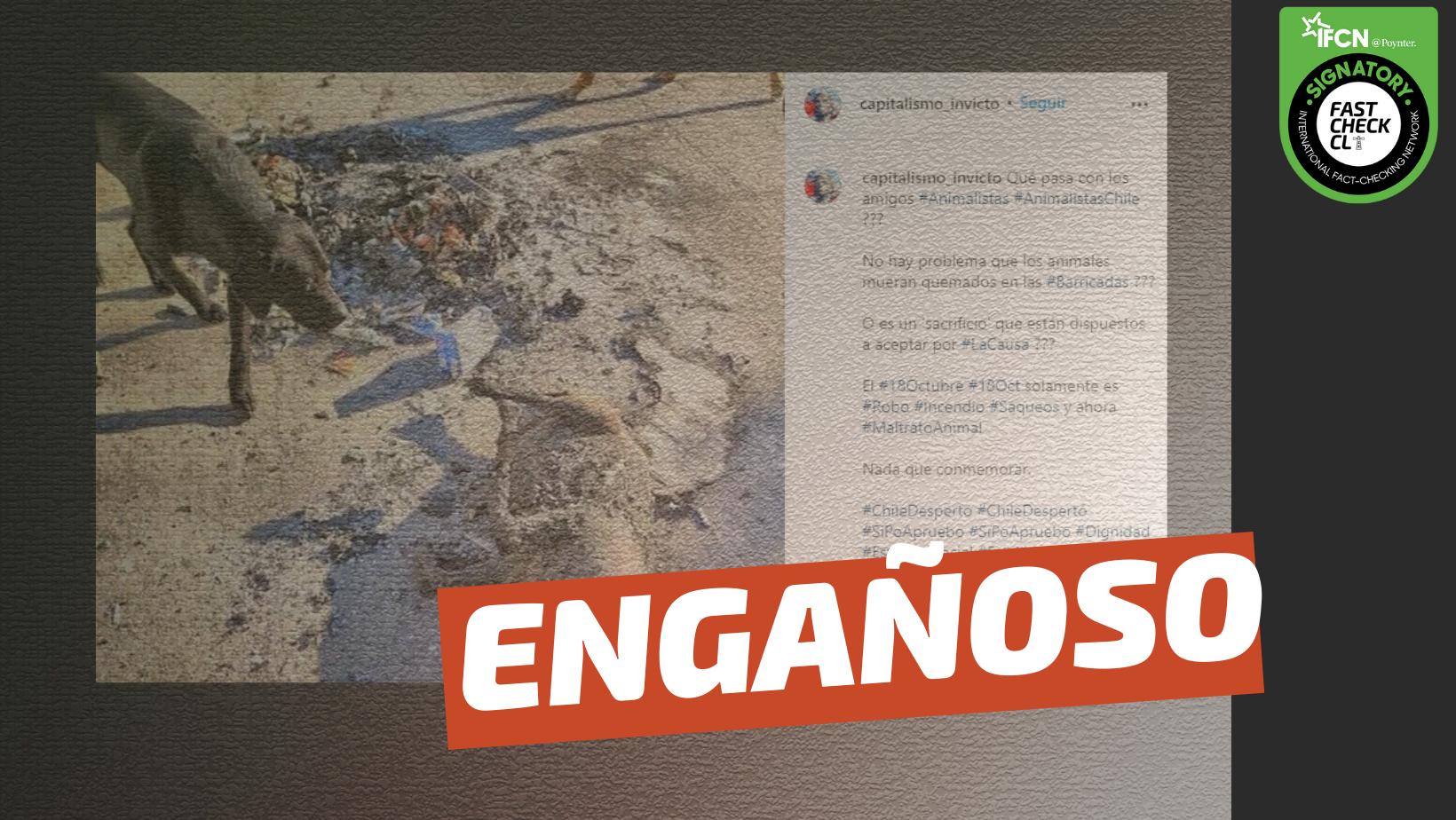 Read more about the article (Imagen): Perro fue quemado en barricadas: #Engañoso